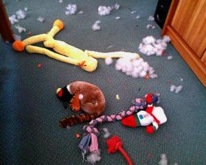 A little bit of mutilation occurred in our living room on 2-21-13