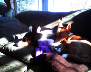 Nap time in the sunshine after rambunctious play time!