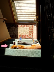 Charlie & Ruby catchin some rays on the stairs 2-27-13