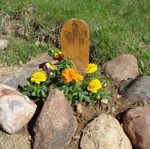 Charlie's grave