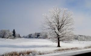 Crisp, cool beauty - Hoar Frost
